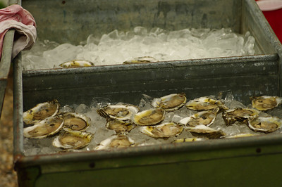 The Shucking Bin - Wellfleet Oysters