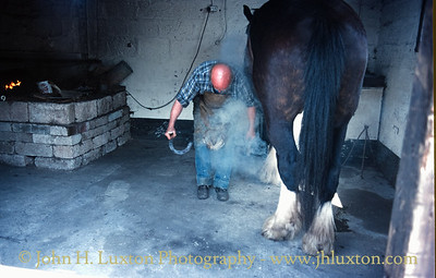 Shire Horse Farm and Carriage Museum, Tresklillard, Redruth, Cornwall - May 22, 1986
