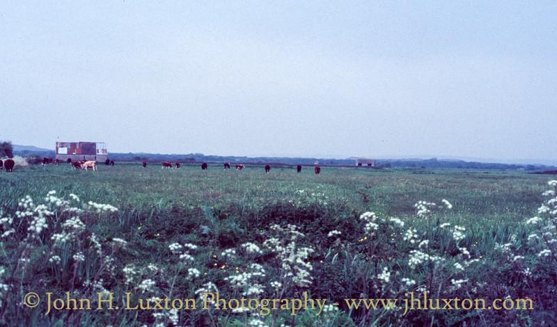 Great Field, Braunton, Devon - May 16, 1985