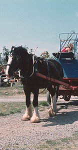 The National Shire Horse Centre, Yealmpton -