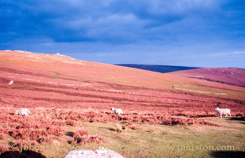 Birch Tor, Dartmoor - September 02, 1982