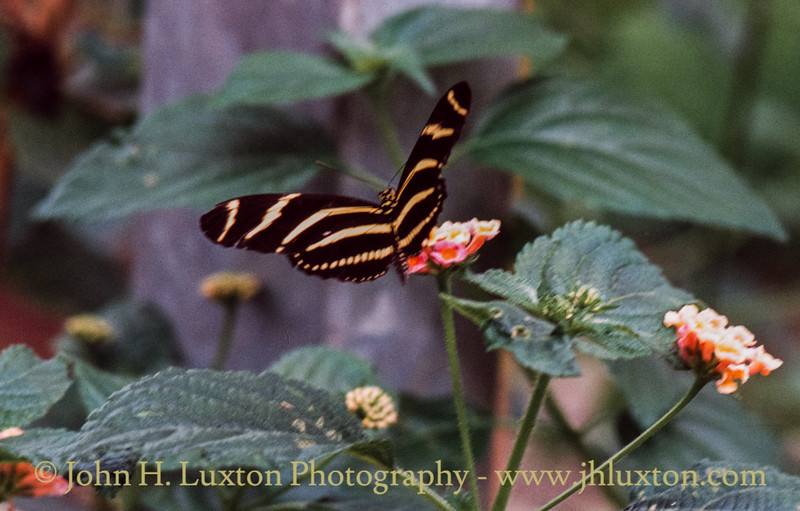The Buckfast Butterfly Farm, Buckfastleigh, Devon - August 23, 1984