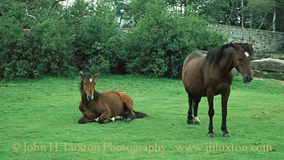 Postbridge, Devon - August 08, 1989