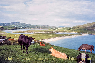 Barley Cove, County Cork - May 27, 1998