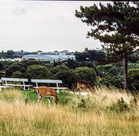 Dublin, Eire - September 03, 1999