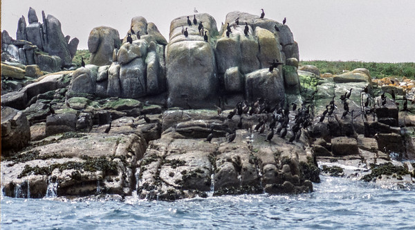 Annet, Isles of Scilly, May 26, 1992