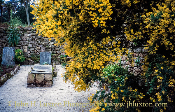 Tresco, Isles of Scilly - April 1994