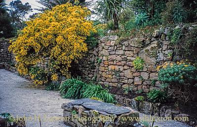 Tresco, Isles of Scilly - April 1994