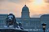 Budapest evening lion