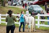 Daniela Rathke, from Alstead, NH,  is judged on tasks in the in-hand obstacle course competition at the Guilford Fair on Sunday; KELLY FLETCHER, REFORMER CORRESPONDENT