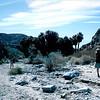 FEB98 - Palm Springs