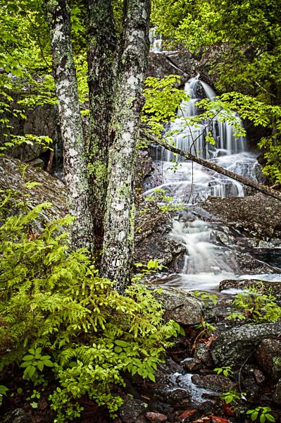 Hidden Cascade, Spring