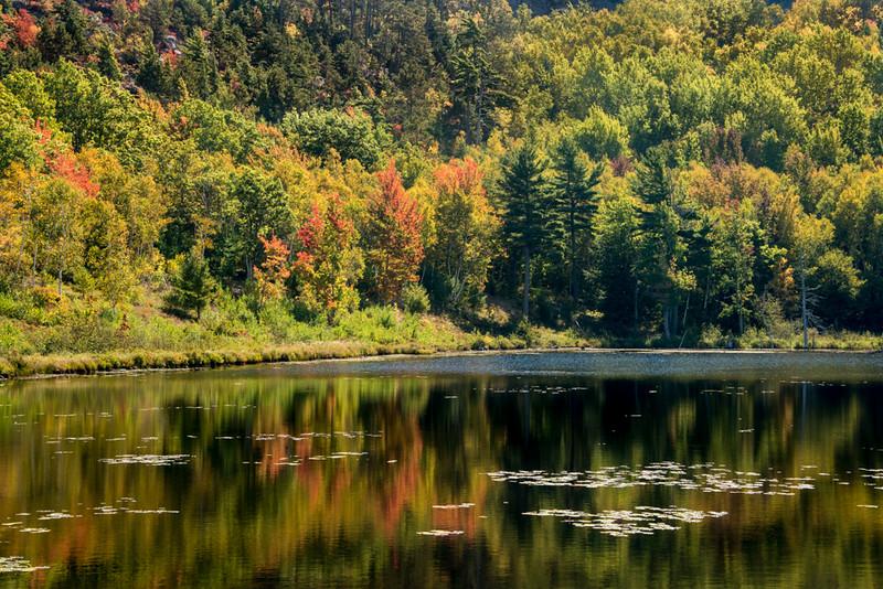 Beaver Pond, Autumn