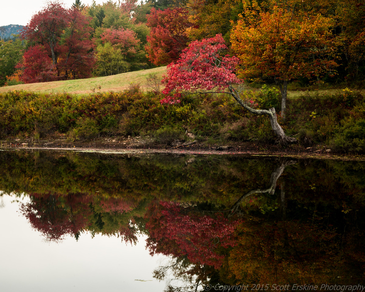 Little Long Pond, Maple Reflection