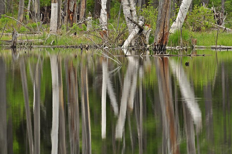Beaver pond 3a_DSC7350