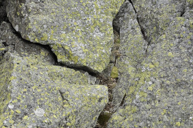 Rocks and litchen_DSC6413
