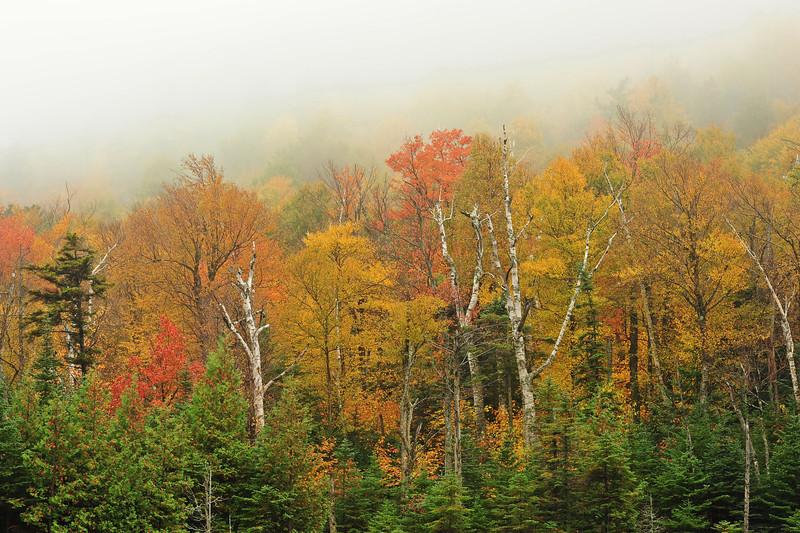 Whiteface trees 1 DSC_9816