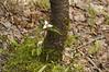 Woods 13_DSC6833
