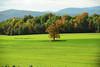 Day four Vermont 35 DSC_9741
