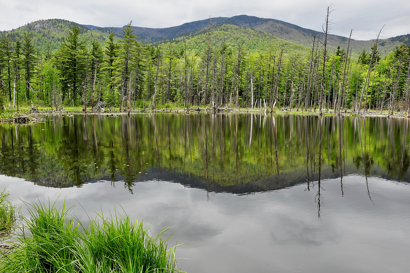 Beaver pond 10_DSC7391