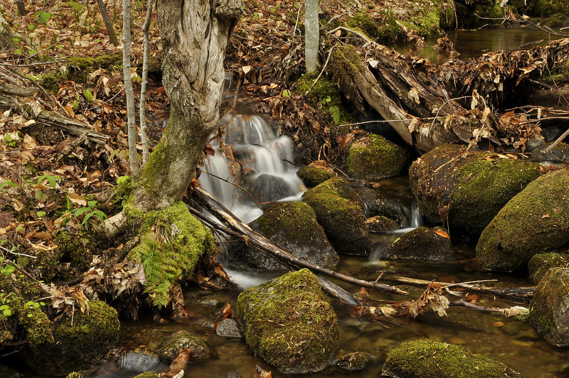 Woods 7_DSC6796