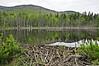 Beaver pond 2a_DSC7343
