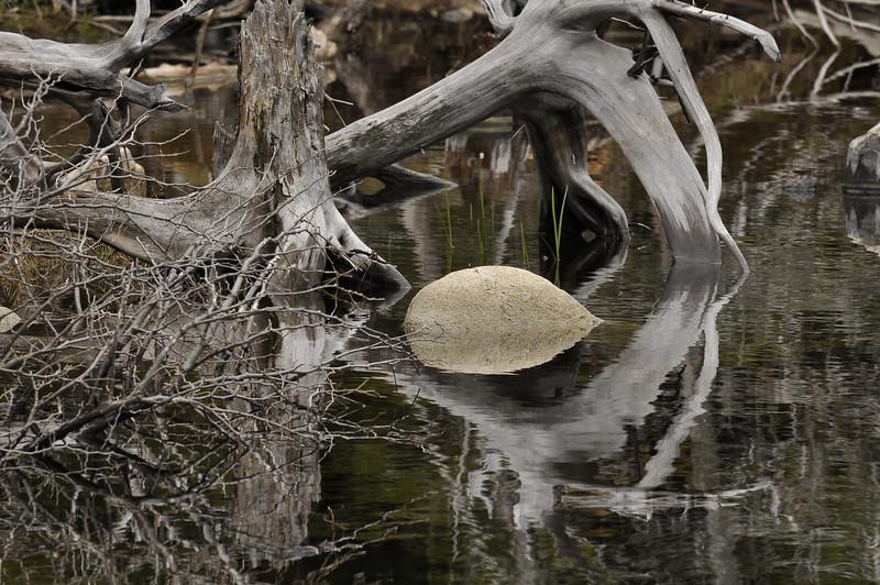 Pond reflections 3_DSC6333