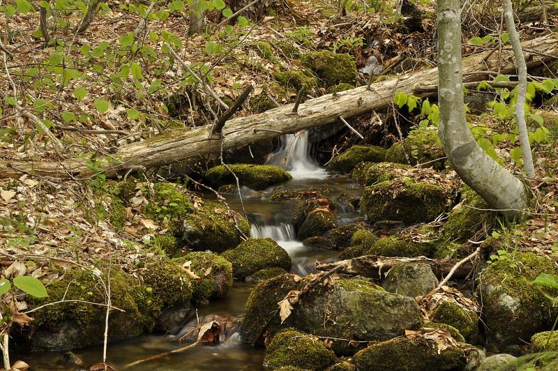Woods 10_DSC6804