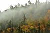 RT 86 fog 2 DSC_9823