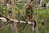 Beaver pond 9_DSC7368