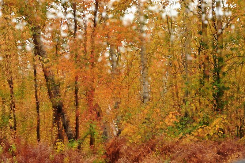 Whiteface trees 3 dreamy DSC_9821