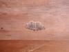 Geometrid moth (?) - Harrietstown, Franklin County, NY - 6/16/2003 6:41PM