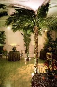 Desert Island or Jungle?
