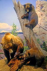 A Brown  Bear Family