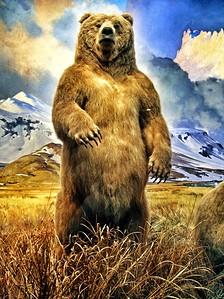 Alaska Brown Bear in American Museum of Natural History