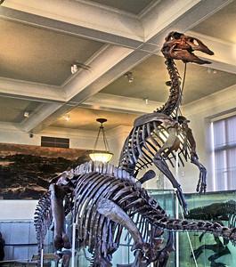 Fossils in the David H. Koch Dinosaur Wing