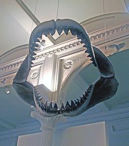 Jaws of Prehistoric Shark