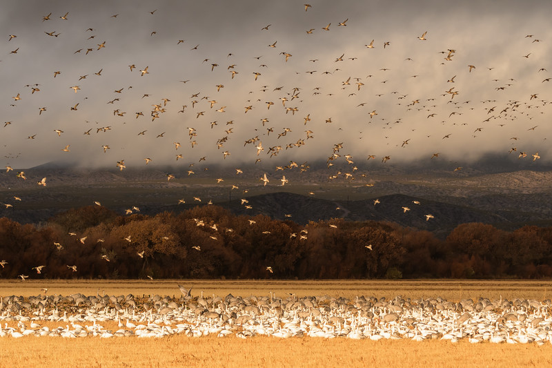 Avian Menagerie