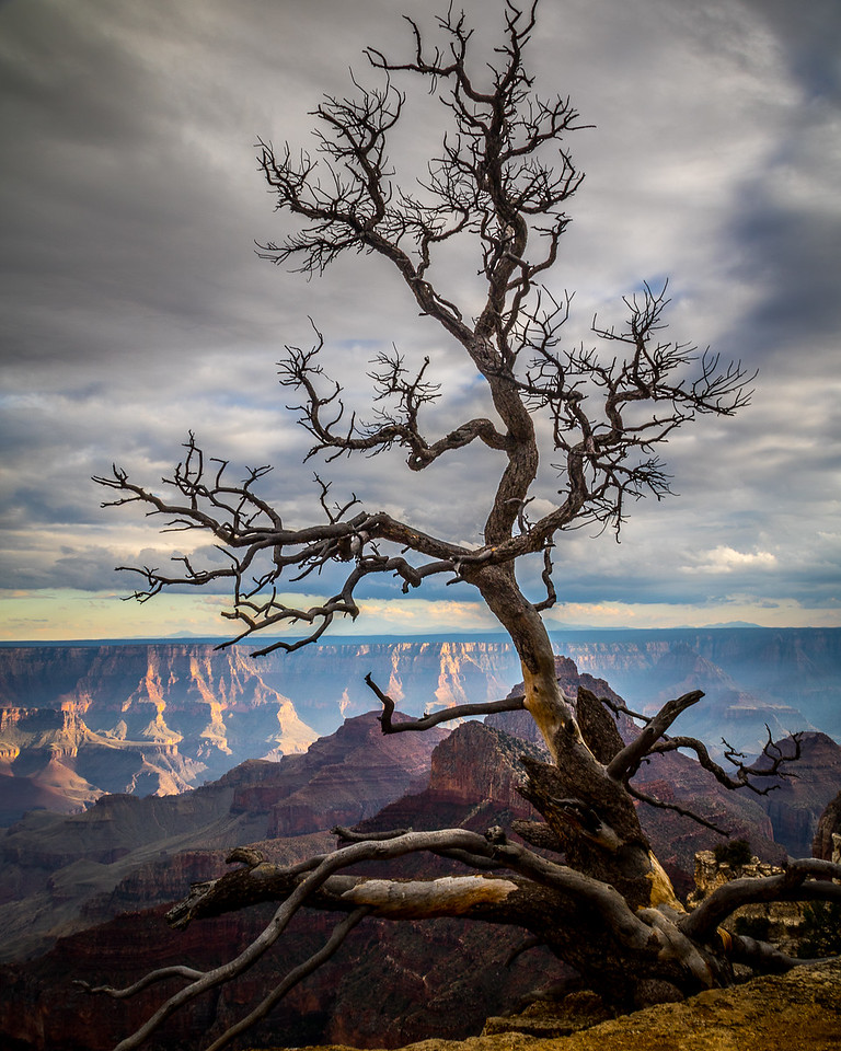 Clinging to Life, Grand Canyon