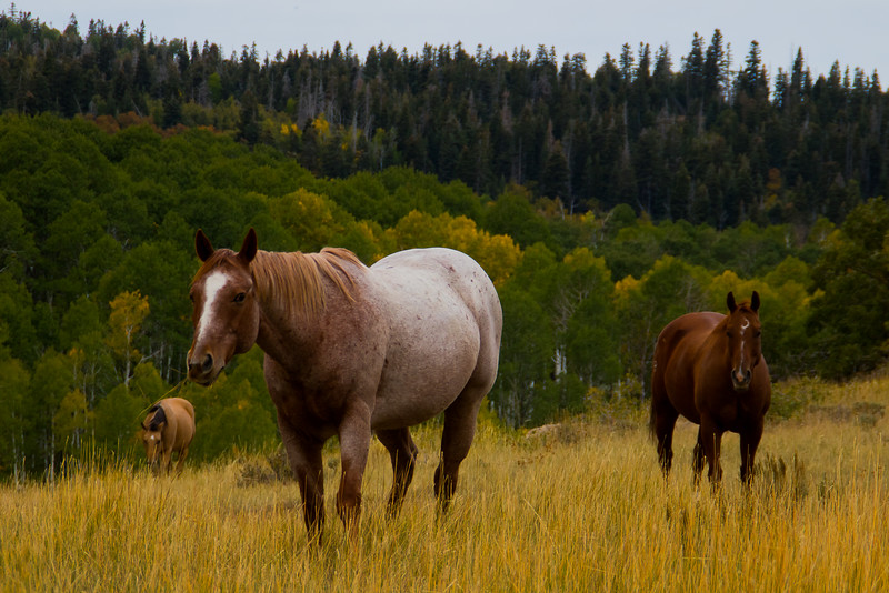 Horses Near Zion National Park