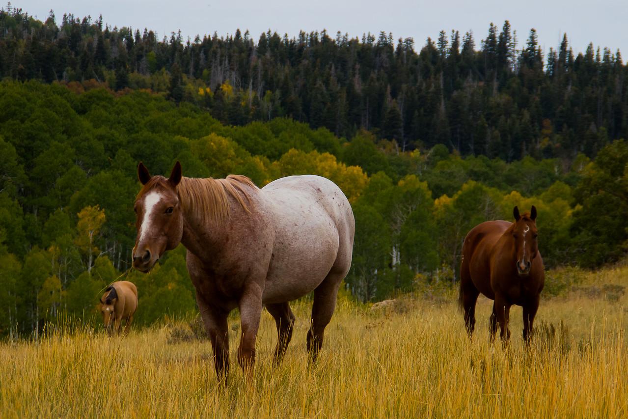 Horses Near Zion National Park