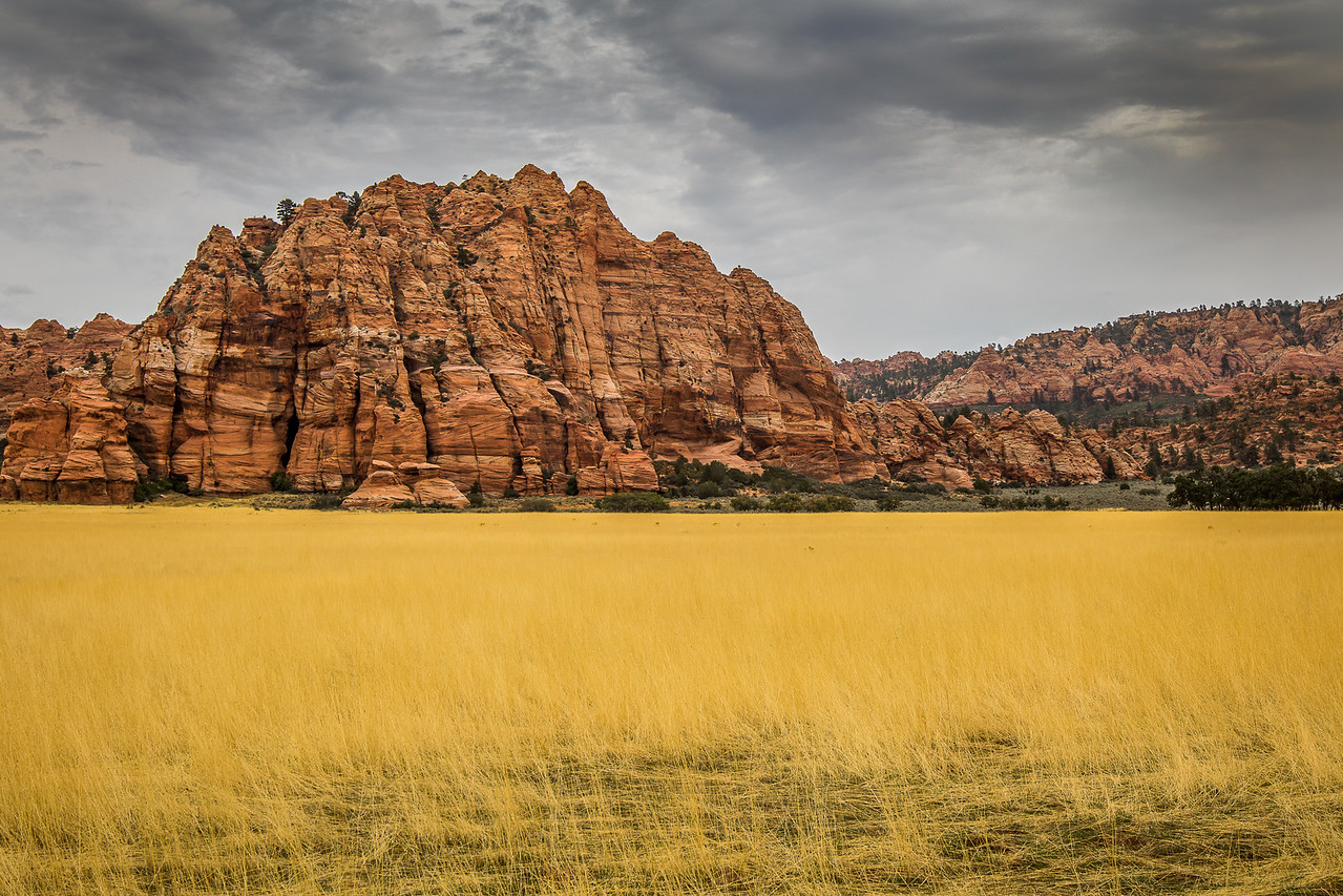 Fields of Gold, near Zion National Park