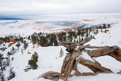 Dead wood and fog overlooking Bryce Canyon in January