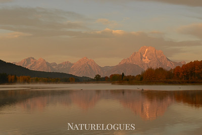 Morning at Oxbow Bend