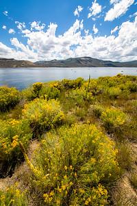 Flowers along Blue Mesa Reservoir