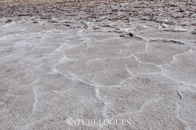 Salt Patterns at Badwater