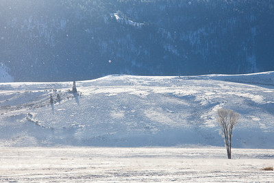 Tiny flakes of snow glimmer like dust through the sunbeams on a frigid afternoon outside Jackson Hole, Wyoming