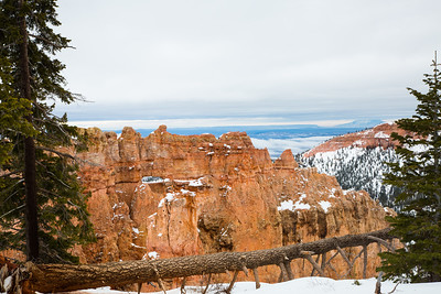 Overcast light and a fallen tree in Bryce Canyon