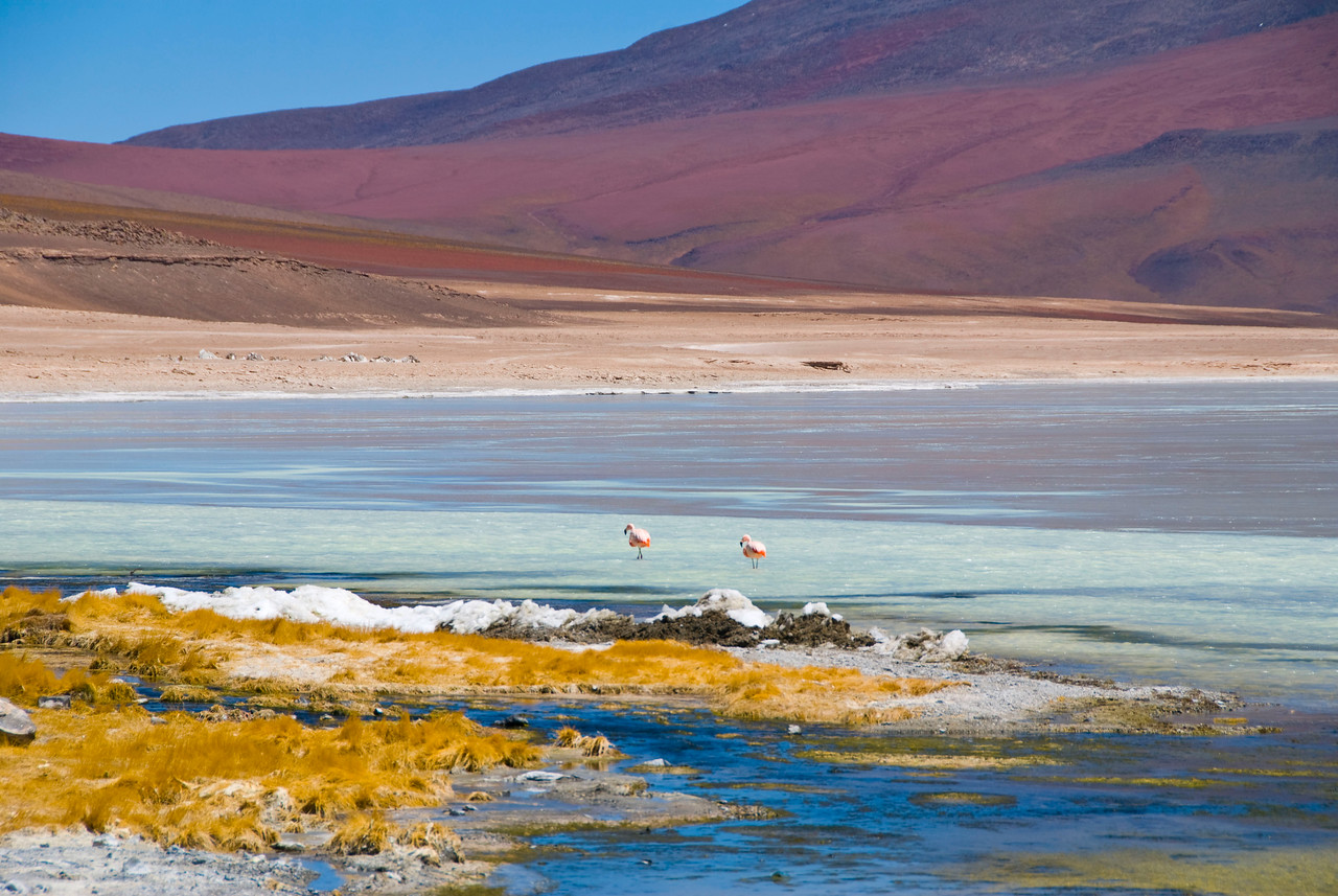 Flamingos in the cold 4,000 meters high