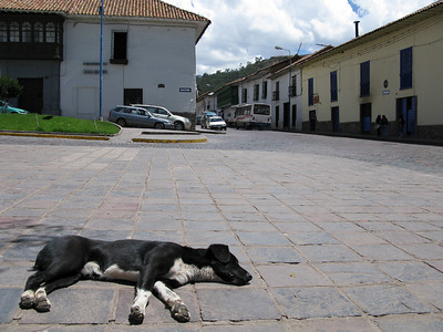 dog cusco